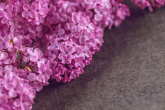 Detail photography of purple lilac, macro, spring blooming plant Royalty Free Stock Photo