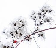 Detail of plant covered with ice Royalty Free Stock Images