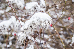 Detail of plant covered with ice Stock Photos