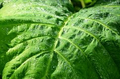 Detail of a plant in Salvadorian jungle Royalty Free Stock Image