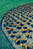 Detail of planting flowers in garden Royalty Free Stock Images