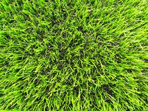 Detail of plastic grass field on football playground. Detail of a cross of painted white lines in a soccer field. Artificial grass Royalty Free Stock Images
