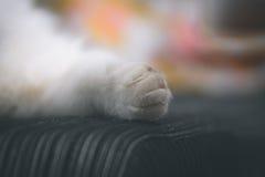 In detail pluizige poot van een kat in het art. Royalty-vrije Stock Afbeeldingen