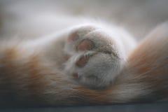 In detail pluizige poot van een kat in het art. Stock Afbeeldingen