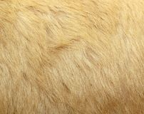 Detail of polar bear fur Royalty Free Stock Photos