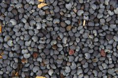 Detail of poppy seeds (food ingredient) Stock Images
