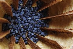 Detail of poppy seeds (food ingredient) Stock Photos