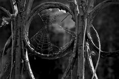 Detail of an prison doors with spider web. Old prison doors with a spider web Stock Photography