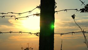 Detail of a prison or military fence of barbed wire at sunset close-up. The border zone, the danger zone, the security. Zone, the fence of the military unit and stock video