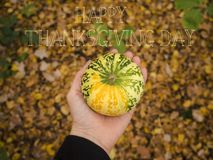 Happy thanksgiving day. Detail of pumpkin in background colors of autumn royalty free stock photos