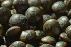 Detail of puy lentils stock photo