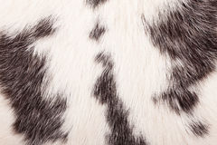 Detail of rabbit fur. A macro texture of rabbit fur Royalty Free Stock Images