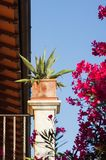 Forte dei marmi,italy. Detail of the rchitecture and flower in the luxury italian resort of forte dei marmi royalty free stock photo