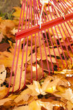 Detail of red metal rake and piles of bright yellow maple leaves in autumn