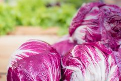 Radicchio salad on market stall Royalty Free Stock Photo