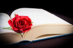 Detail of red rose on the open book Royalty Free Stock Image