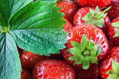 Detail of red strawberries Royalty Free Stock Photos
