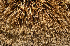 Detail of reed thatch Royalty Free Stock Images