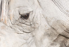 Detail of a rhinoceros Stock Images