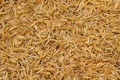 Detail of Rice husk for background Royalty Free Stock Photo