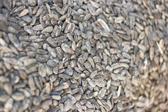 Detail of roasted salty sunflower seeds Royalty Free Stock Photos