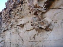 Detail of a rock on akamas peninsula Royalty Free Stock Photography