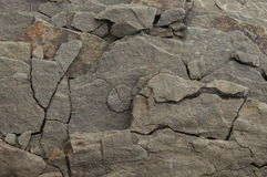 Detail of rock. Natural background. Stone. Natural background. Detail of rock from the mountain used for background or study. Stone Royalty Free Stock Photos