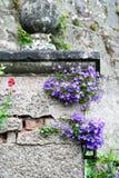 Detail Romantic garden Royalty Free Stock Photos