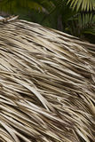 Detail of a roof made of dried palmtree leaves from a hut Royalty Free Stock Photo