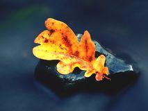Detail of rotten old oak leaf on basalt stone in blurred water Stock Photos