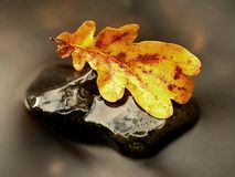 Detail of rotten old oak leaf on basalt stone in blurred water Stock Images