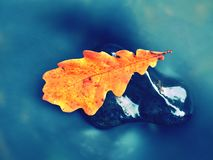 Detail of rotten old oak leaf on basalt stone in blurred water Stock Photography