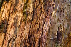 Detail of a rotting tree. Detail of a rotting oak tree: lots of holes of woodworms and some algae Royalty Free Stock Images
