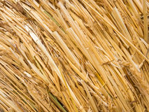 Detail of a round bale of straw Stock Photography