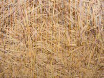 Detail of a round bale of straw Stock Image