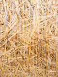 Detail of a round bale of straw Royalty Free Stock Images