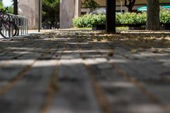 Detail of rustic wooden floor in park. Close up stock image