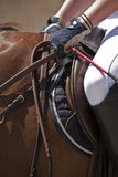 Detail of saddle and leads a Spanish purebred horse Stock Image