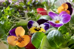 Detail of a salad with edible pansies and fresh broccoli and kale microgreens royalty free stock images