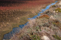 Detail of Saltern Pond. With Colorful Plants Royalty Free Stock Photos
