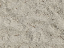 Detail of sand background texture and dry plant seaweed Royalty Free Stock Images