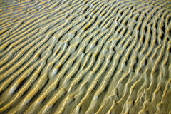 Detail of sand structure. Of sahara desert Royalty Free Stock Photo