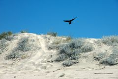 Detail of a sandy beach with plants and a bird flying Stock Photography