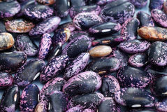 Detail, scarlet runner beans Royalty Free Stock Images