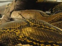 Detail, schalen van een anaconda Stock Afbeelding