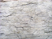 Detail of Sea Worn Log Texture Pattern Royalty Free Stock Images