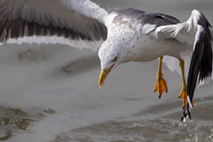 Detail of a seagull Stock Photo