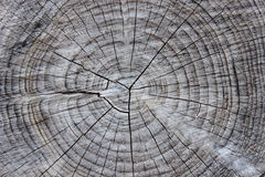 Section of tree trunk Stock Photos