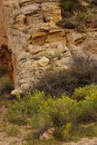 Detail sedimentary rock formations Royalty Free Stock Images