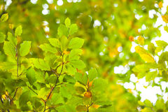 Detail shot of bright green leaves Stock Image